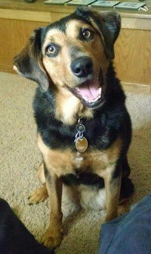 Reeses Rottweiler And Beagle Mix Dog Friends Calm Dog Breeds
