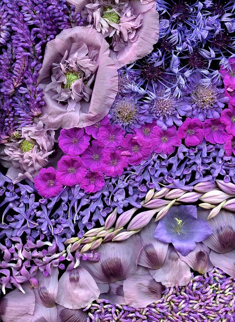 Bouquet by horticultural art, via Flickr