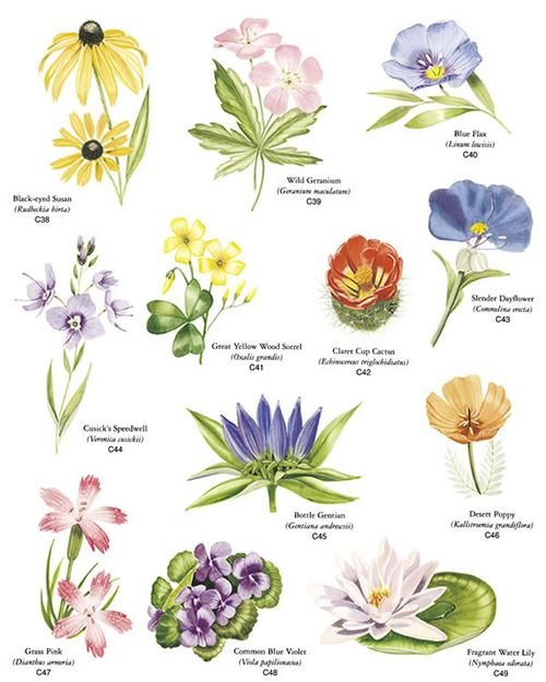 types of inflorescences image | Natural History morpholgy ...