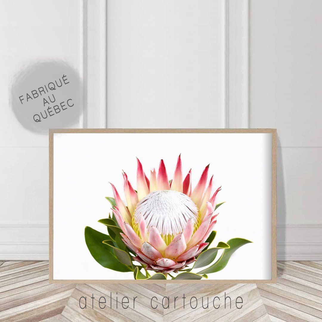 Australian Protea Print Botanical Large Wall Art Poster Protea Printable Digital Download Native Flower Photography Native Flower Poster Wall Art Large Wall Art Flowers Photography