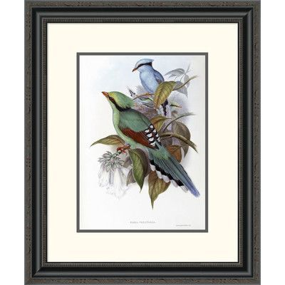 Global Gallery \'Hunting Cissa\' by John Gould Framed Painting Print ...