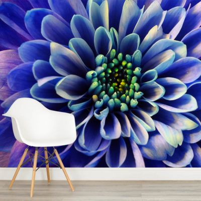 blue-aster-flower-square-1-wall-murals