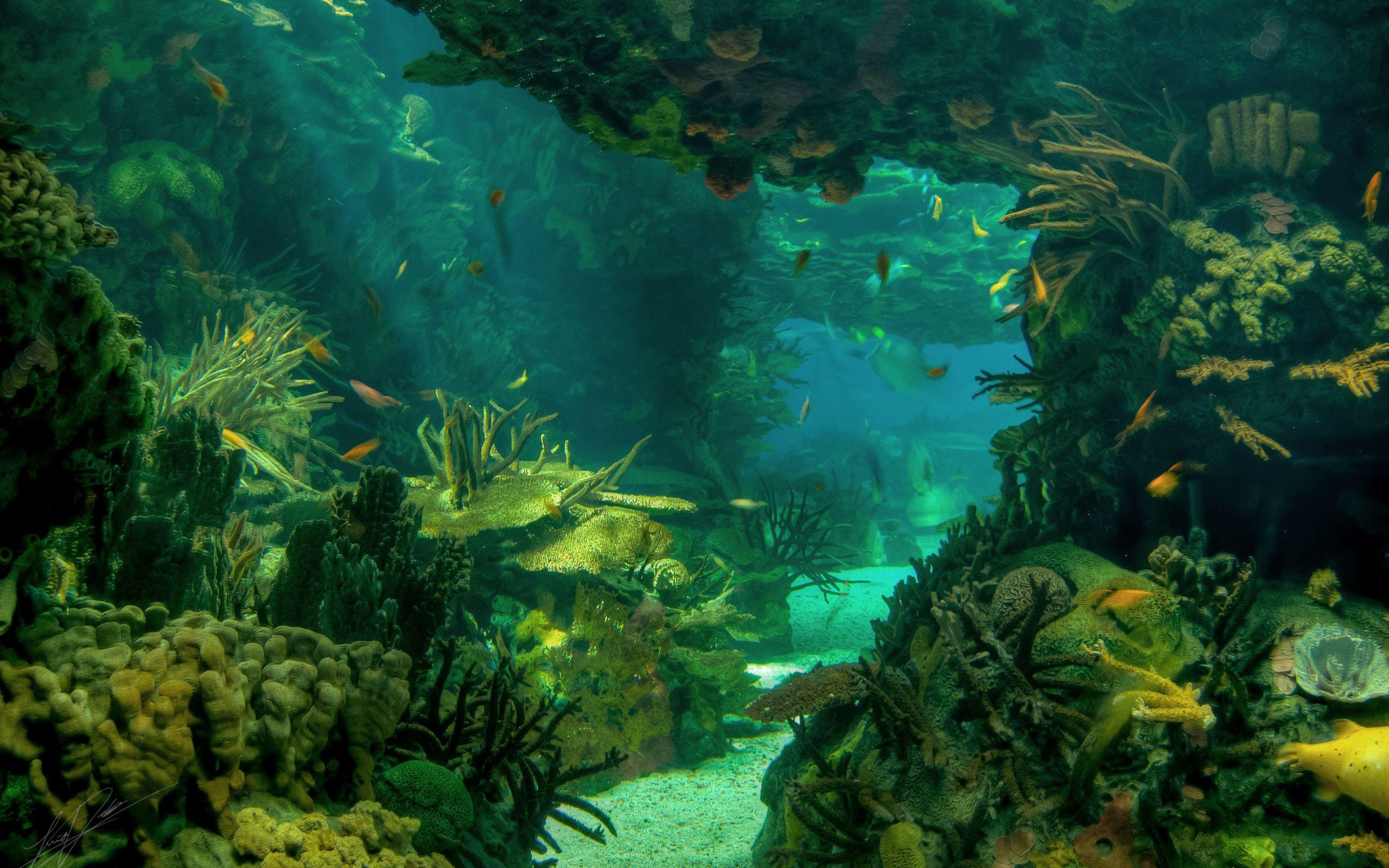 Sea Seabed Landscape Underwater Ocean Fish Wallpaper 2560x1600 89266 Wallpaperup Underwater Wallpaper Sea Pictures Ocean Wallpaper