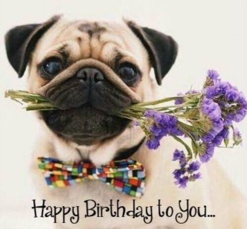 Happy Birthday Pics Dogs Funny Pug Wishing Happy Birthday To You Dog Flower Birthday Pug Cute Pugs