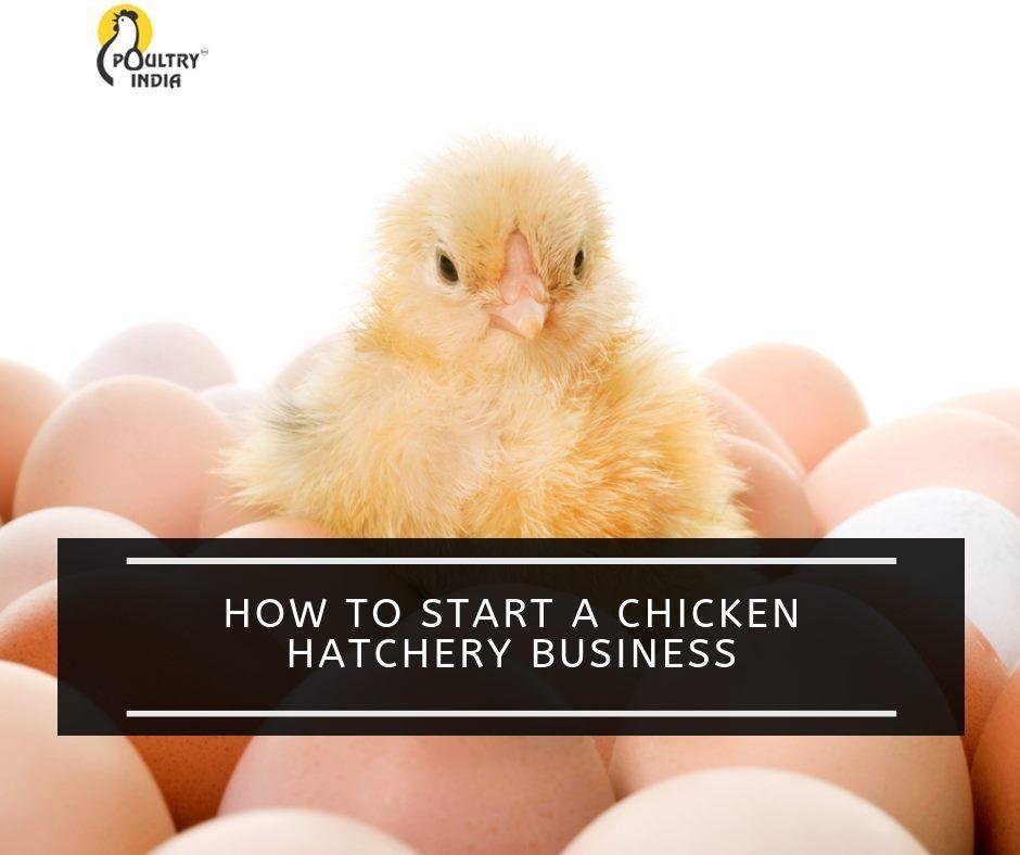 PoultryIndia poultryfarm profit eggproduction