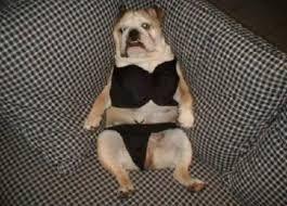 Resultado de imagen para funny dogs