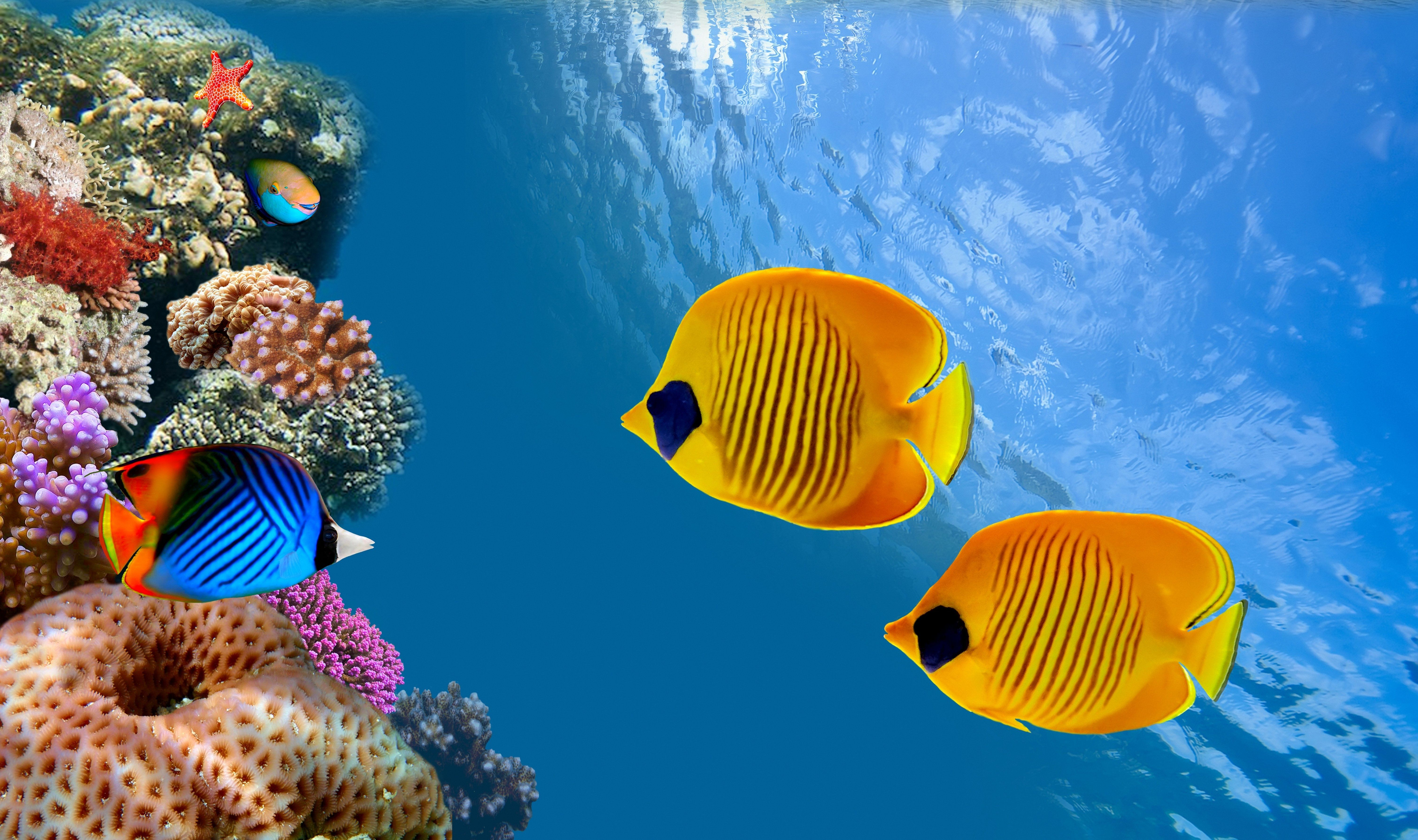 Pin by on pinterest underwater 3d fish underwater world animals wallpaper background publicscrutiny Images