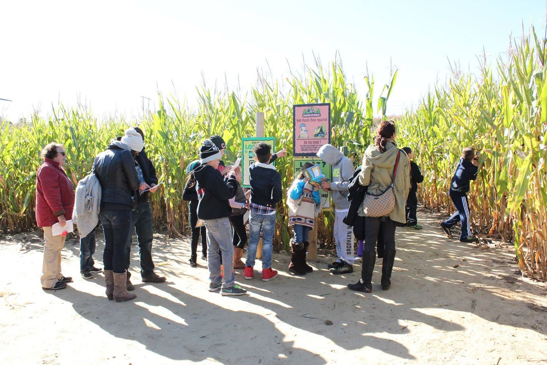 Best corn mazes happy day farm corn maze manalapan nj