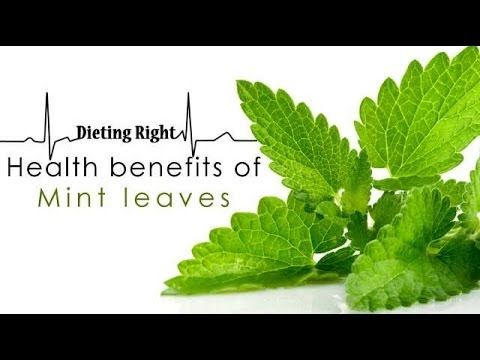 Health benefits of Mint leaves   Ventuno Dieting Right
