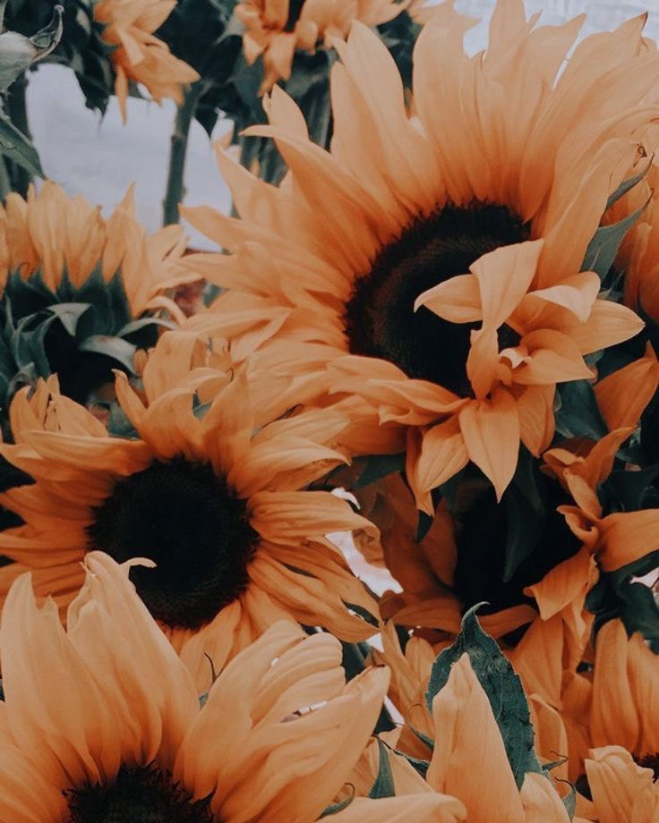 Pin by Mcalles on dream board in 2020 | Sunflower pictures ...