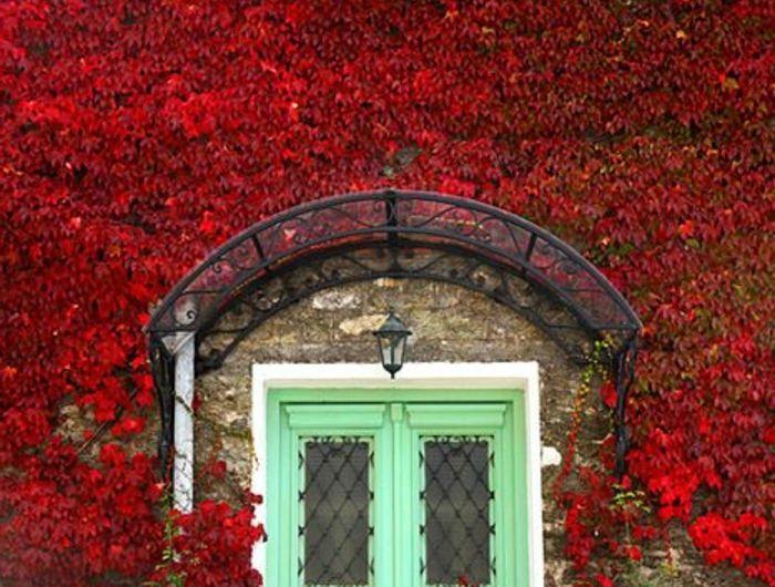 1-une-jolie-maison-avec-lierre-rouge-plante-grimpante-ombre-porte-d-entrée-en-bois-vert-bleu