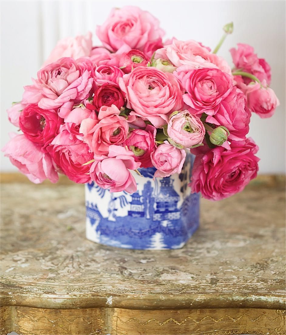 Blue & white & pretty little pink ranunculus for the