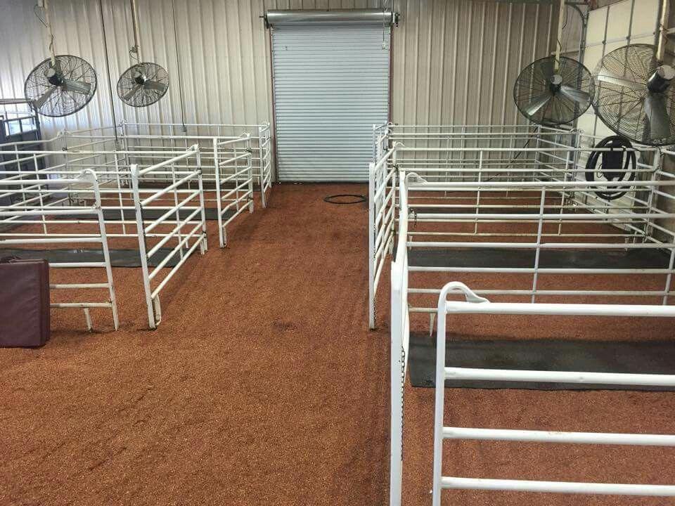 Show Cattle Barn My Life Goat Barn Show Cattle Barn