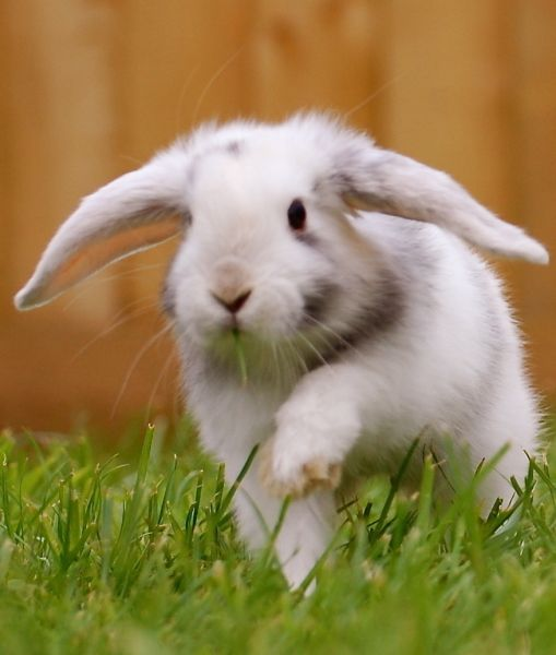 Did You Know Some Legends Claim That Rabbits Are Actually Witches