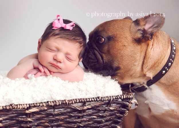 Newborn Baby Girl And Her French Bulldog Protector Newborn And