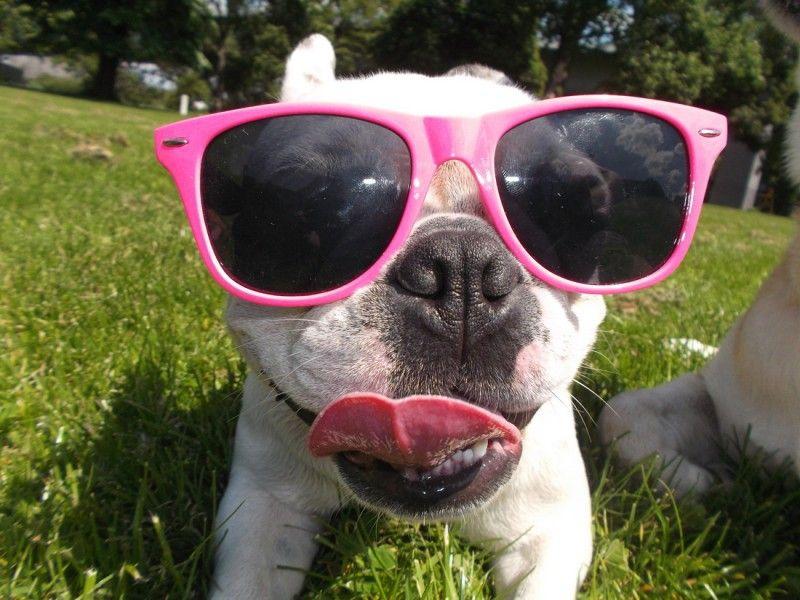 French Bully Rosa  Endlich S☼nne!       Mehr lesen: http://d2l.in/7s  dogs2love - Gassi gehen zum Verlieben. Partnerbörse für alle, die Hunde lieben.  Bild, Dating, Foto, Hund, Single