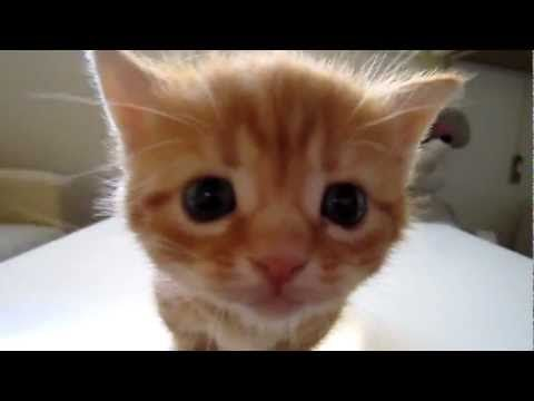 Beautiful Kitten Meowing Hermoso Gatito Maullando Adorable Cute