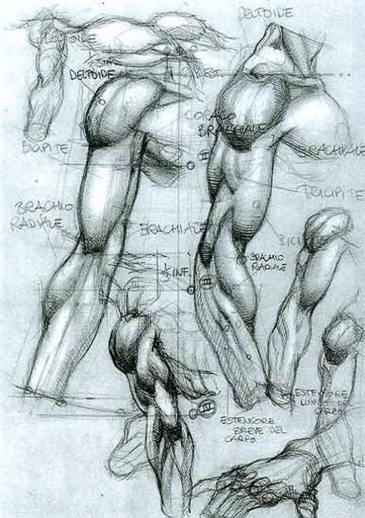 Character Design Collection: Male Anatomy | Anatomy!! | Pinterest ...