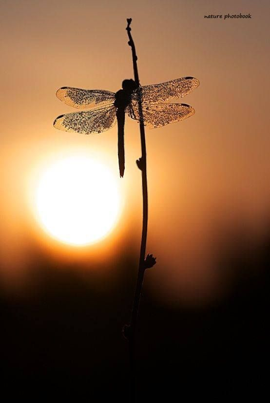 Pretty Dragon Fly