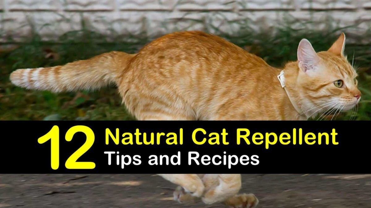 How To Keep Cats Out of Your Garden Cat repellant garden