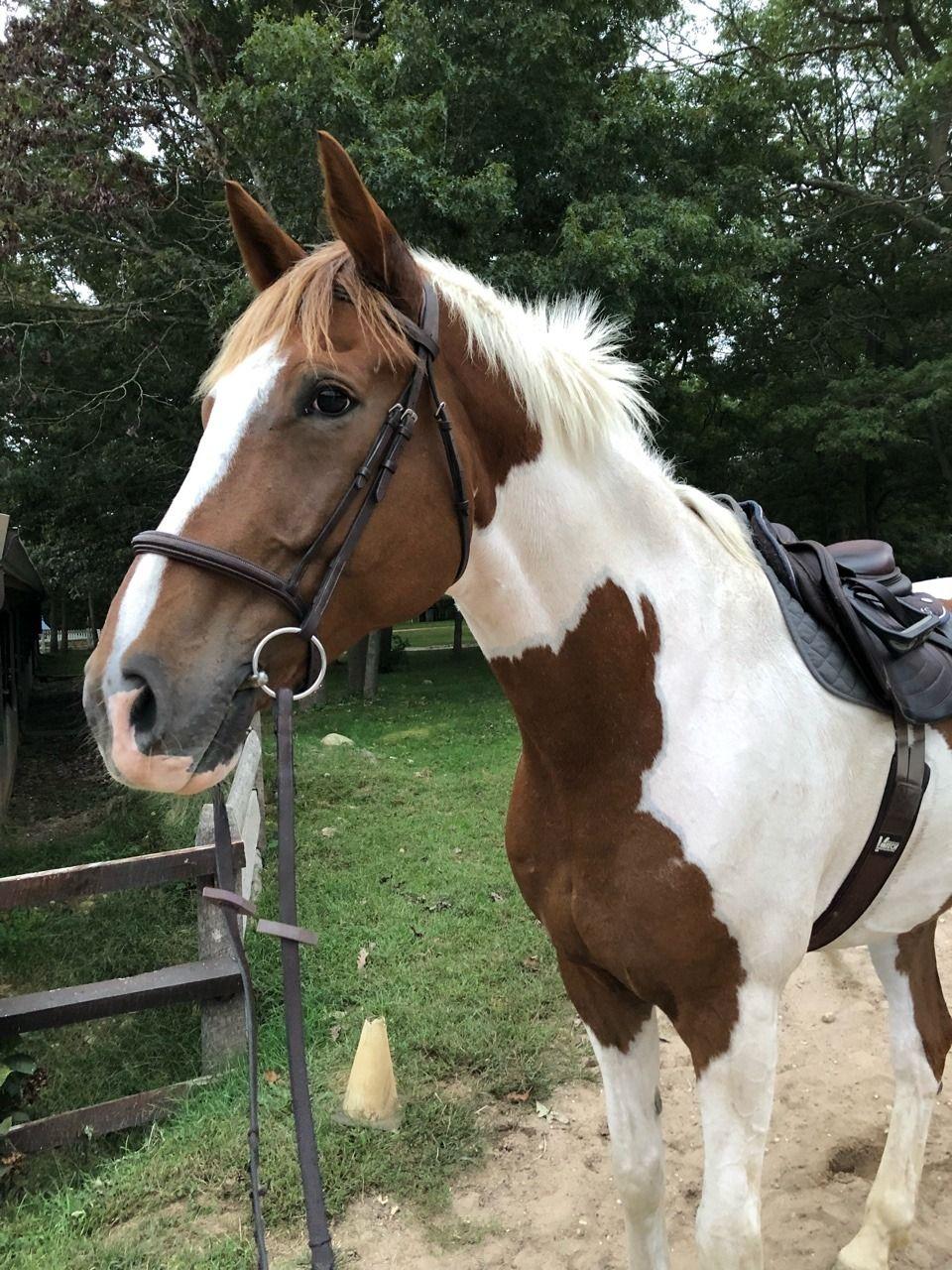 фото спарка коней как она
