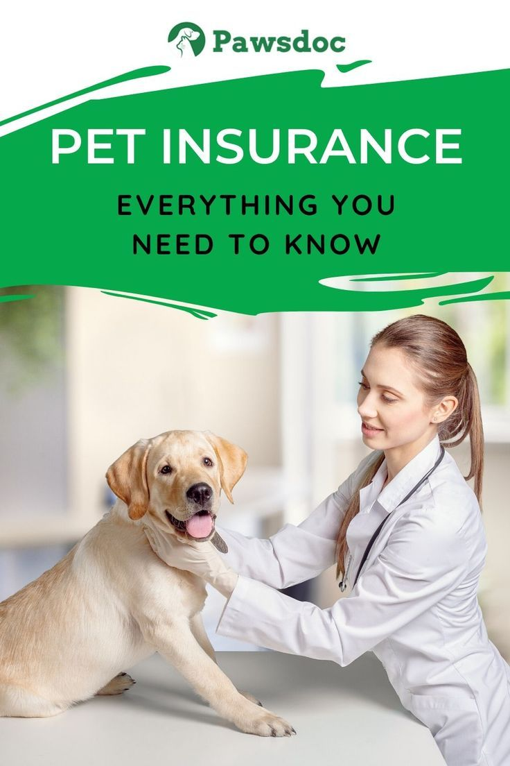 Pet Health Insurance I Everything You Need To Know In 2020 Dog