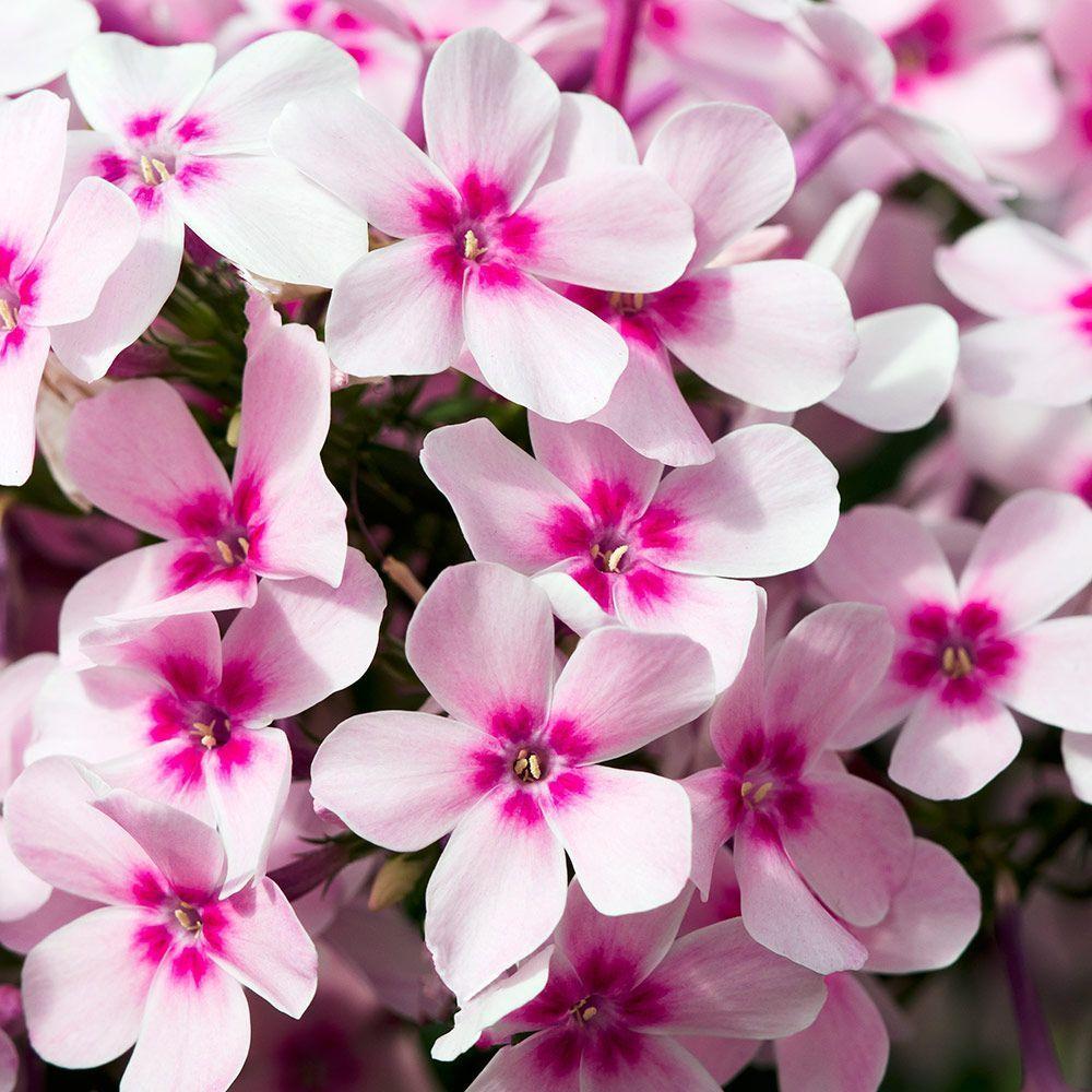 26 Best Perennial Varieties For Your Garden White Flower Farm