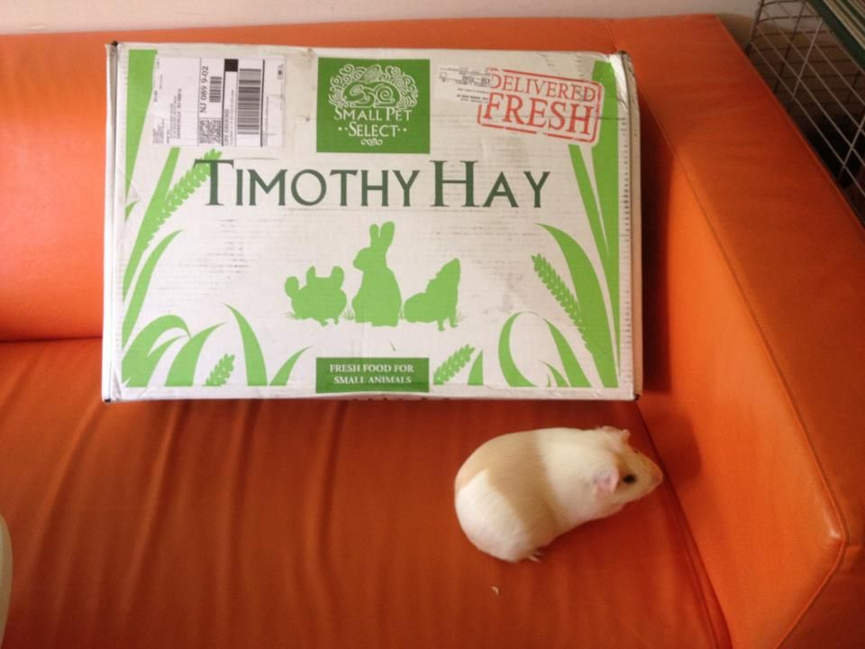 Guinea pigs love this hay! Get Fresh timothy hay for