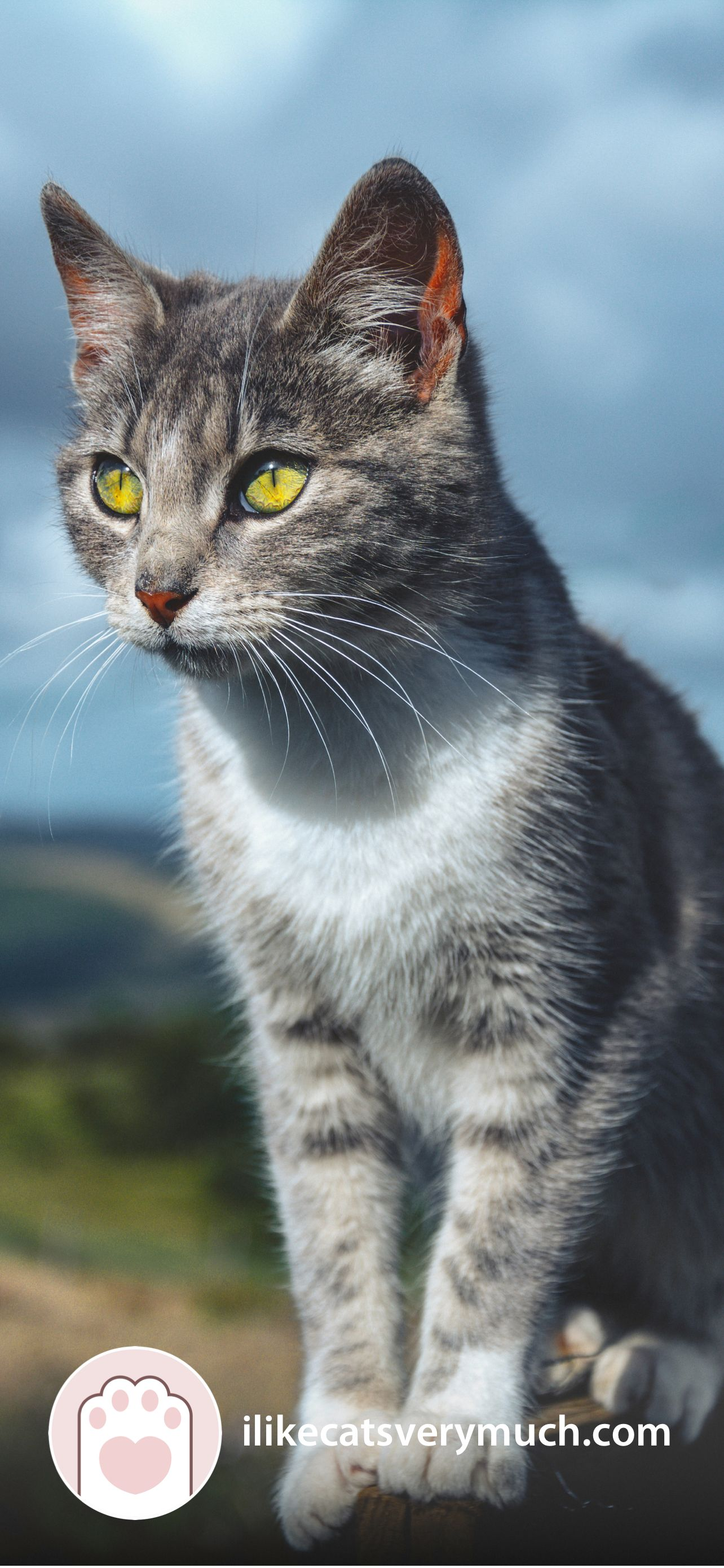 Cat Wallpapers For Phone 2021 I Like Cats Very Much In 2021 Cat Wallpaper Cats Beautiful Cat