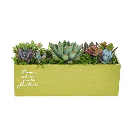 Patio Garden Bloom Where Youre Planted Succulents Plant Centerpieces