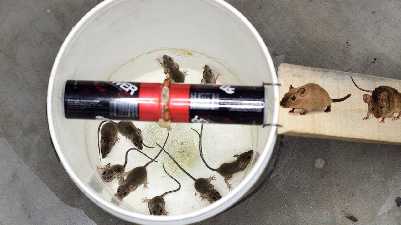 Bucket Mouse Rat Trap Best Mouse Trap Monday Mouse Traps Rat Traps Mouse Traps That Work