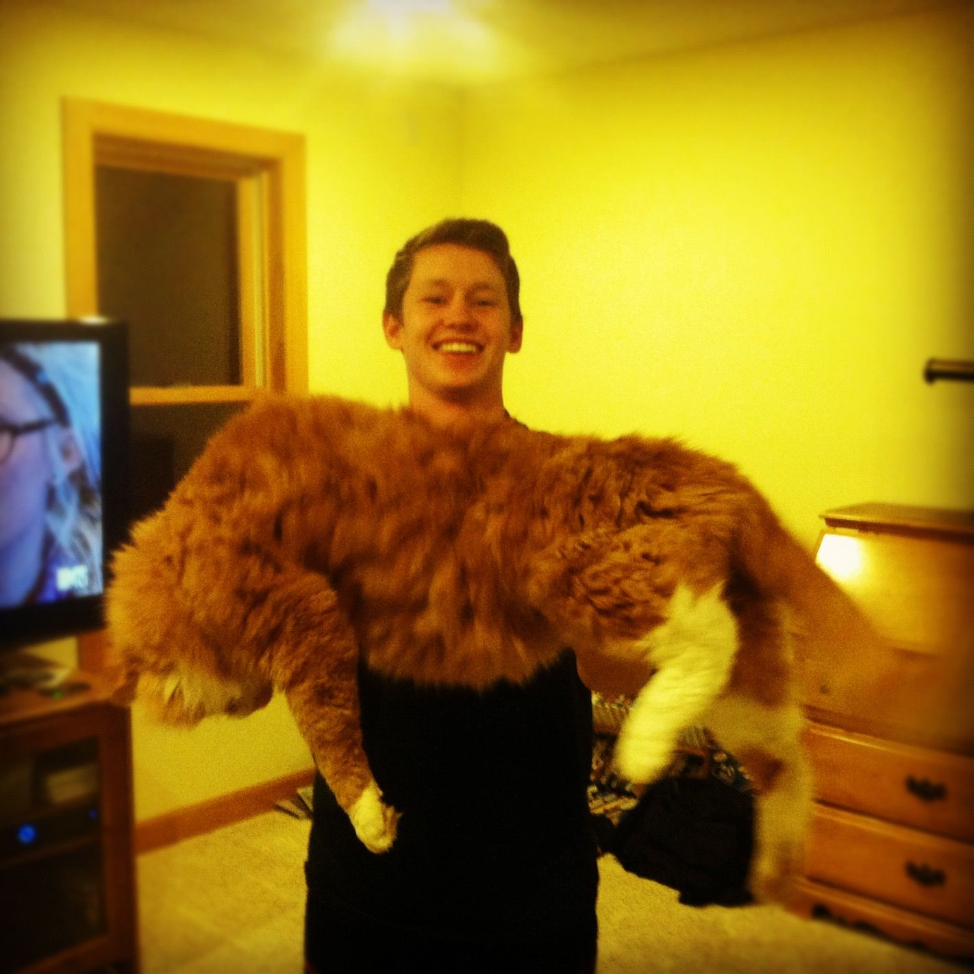 Tank Largest House Cat Ever Cuteness Tiere