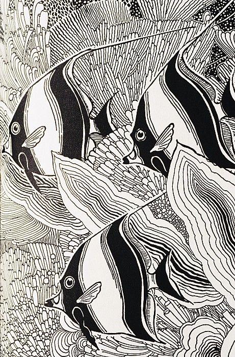Blandings Angelfish by Hawaiian Legacy Archive - P