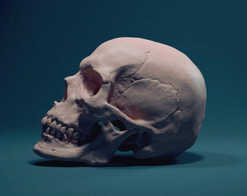 "Курс ""Пластическая анатомия человека"" | Картинки с ..."