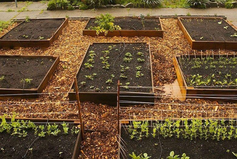 Un Jardin Potager Bio Bon Et Durable Jardin Potager Jardins Potager Bio