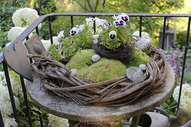 alte clematisranken und moos garten pinterest garden dream garden und planting flowers. Black Bedroom Furniture Sets. Home Design Ideas