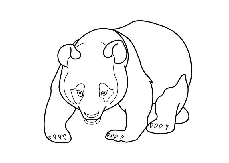 Panda Coloring Pages Pdf Choose The Right Panda Picture Download
