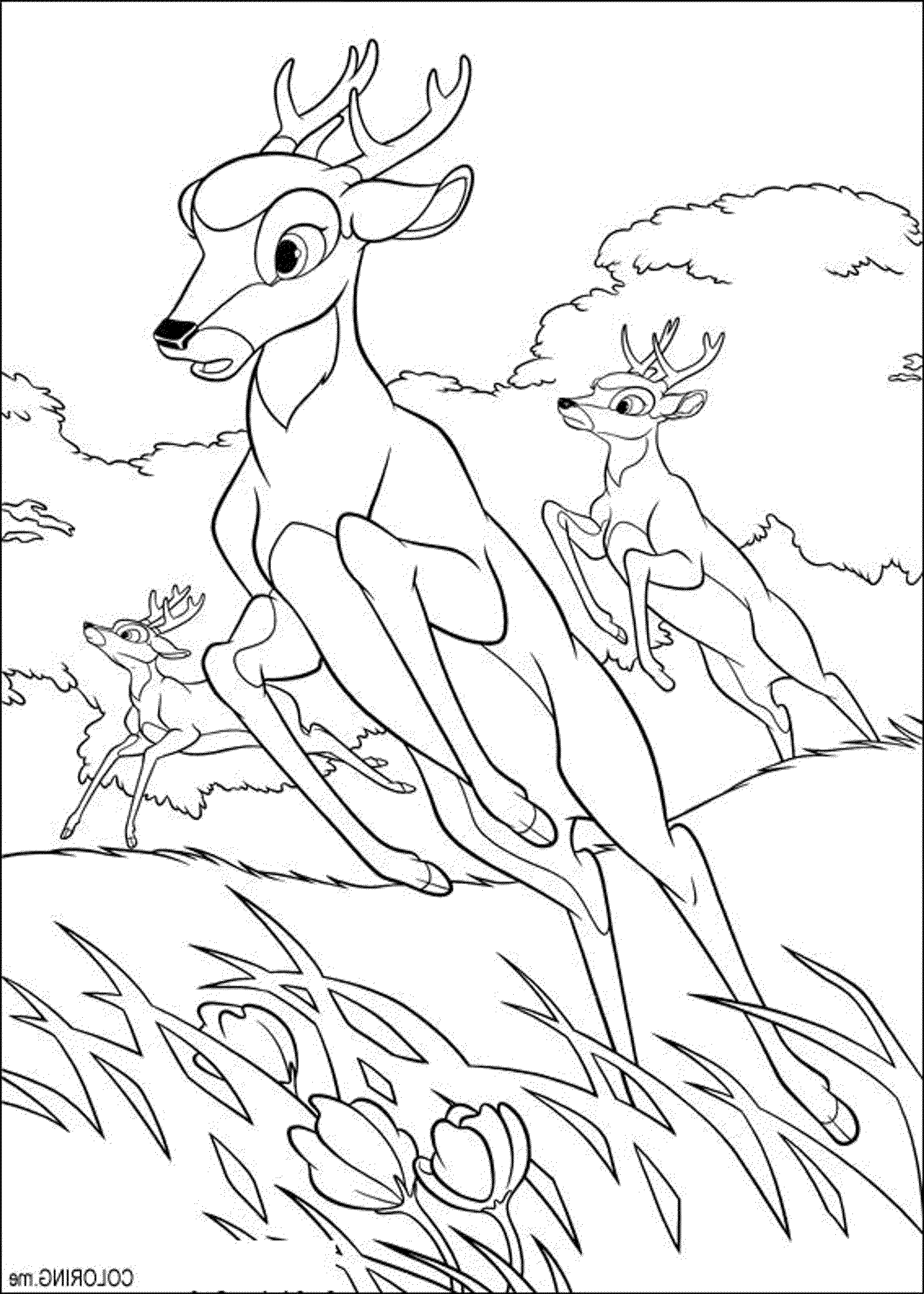 deer hunting coloring pages Deer coloring pages, Horse