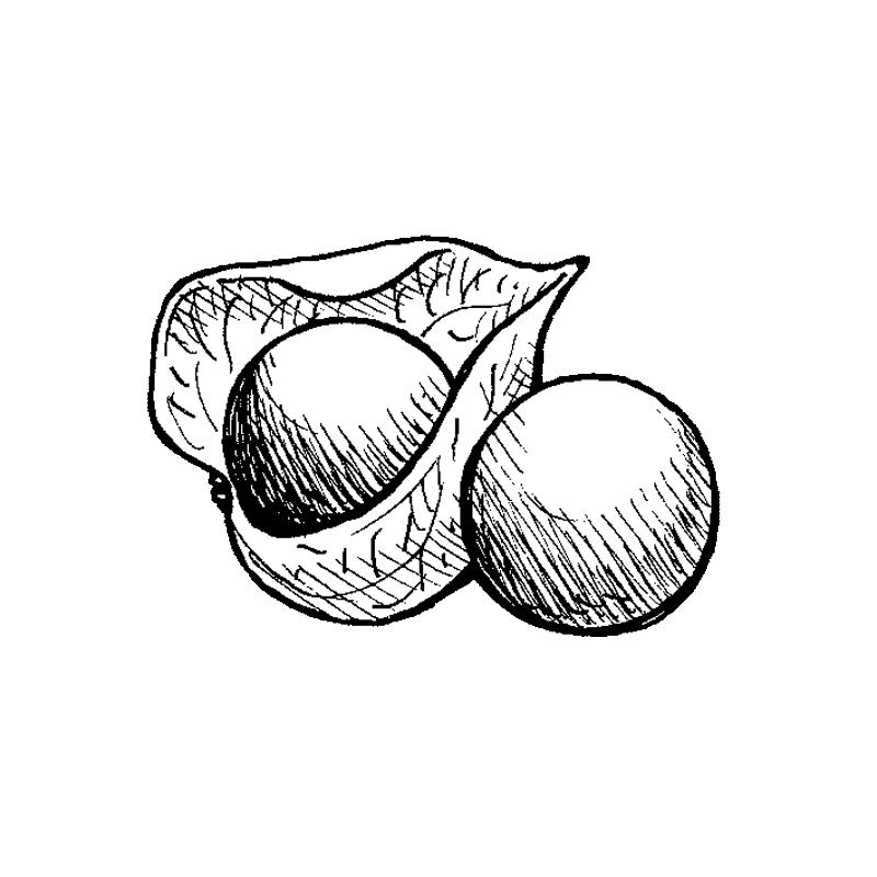 Ananaskirsikka | Osastot | Hyötykasviyhdistys