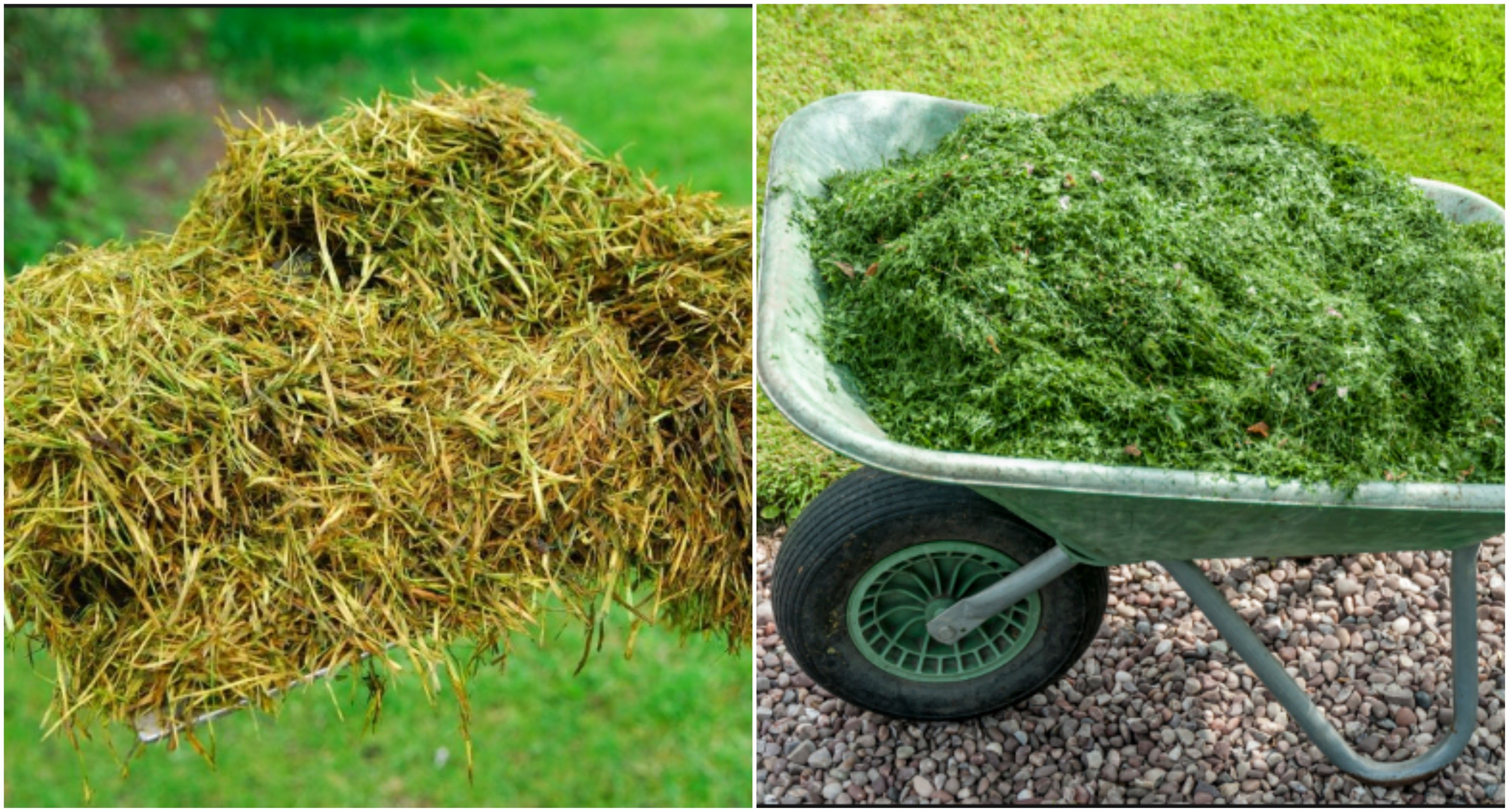 Many of you have banned grass clippings whether you have a big or a
