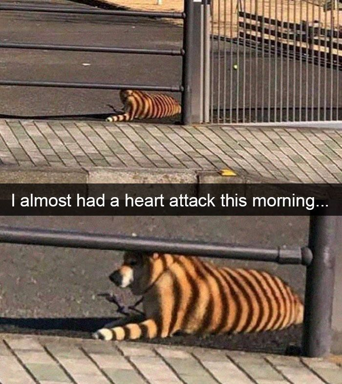 30 Funny And Cute Dog Snapchats That Will Hopefully Make Your Day #funnydogs