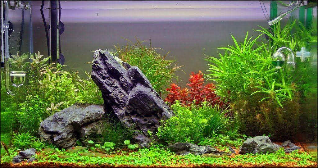 Live Plants In Freshwater Aquarium Nature Aquarium Artificial Aquarium Plants Planted Aquarium