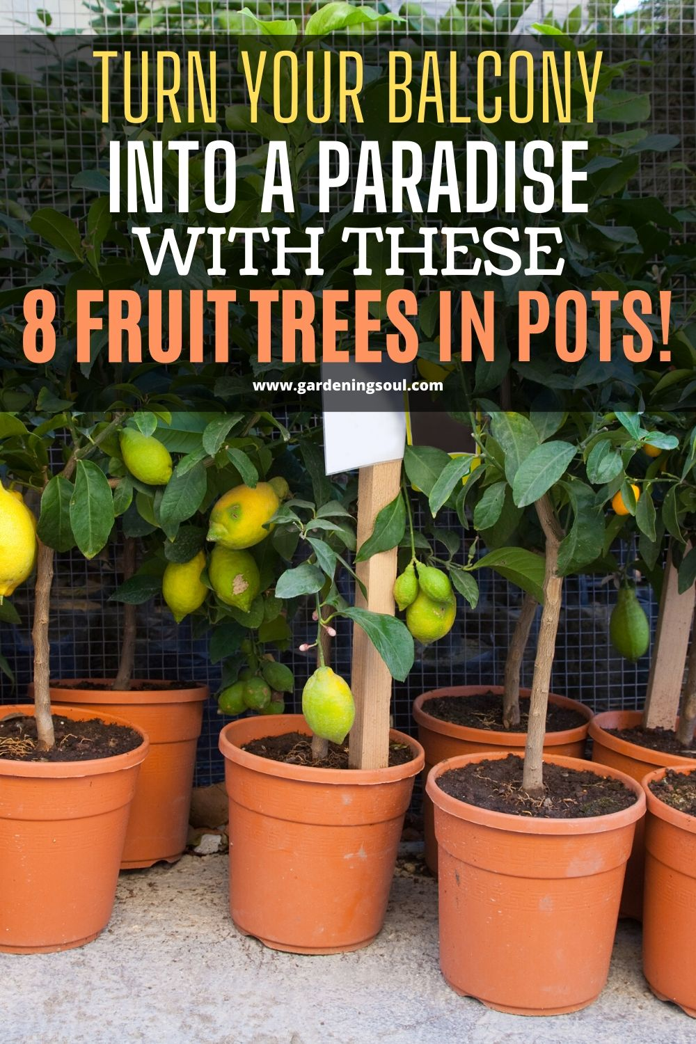 Turn Your Balcony Into A Paradise With These 8 Fruit Trees In Pots Fruit Trees Potted Trees Container Gardening