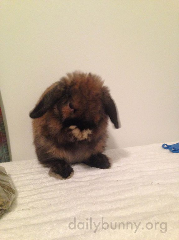 Bunny Almost Revealed His Secret to His Cuteness!