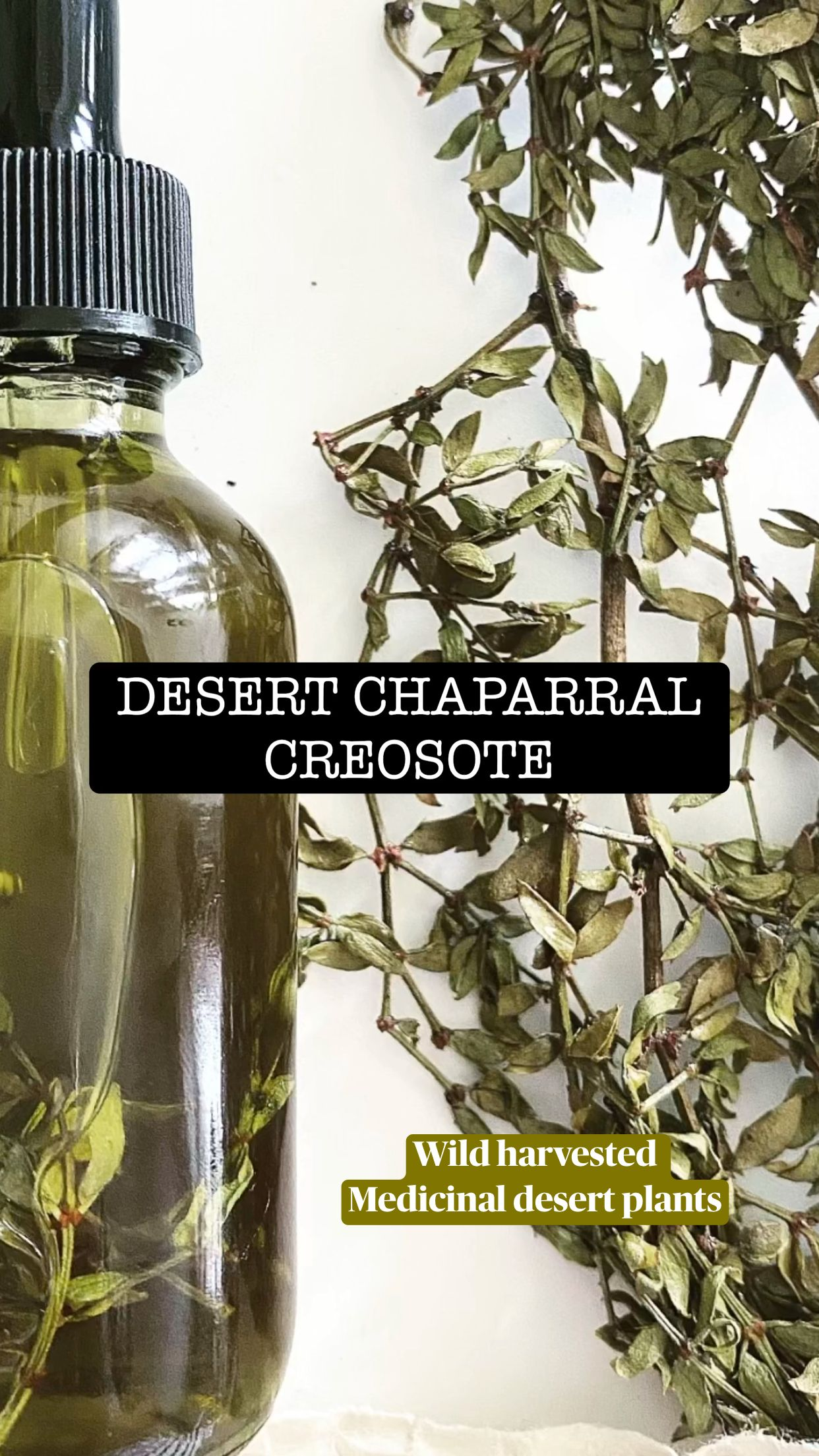 Wild harvested  Medicinal desert plants