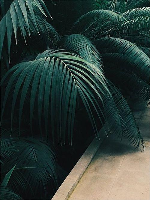 Зеленый цвет в психологии и культуре | Посадка цветов ...