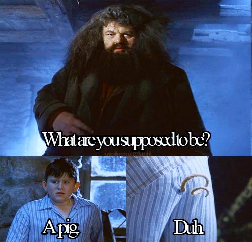 Harry Potter Mean Girls Memes Album On Imgur Harry Potter Memes Hilarious Harry Potter Harry Potter Love