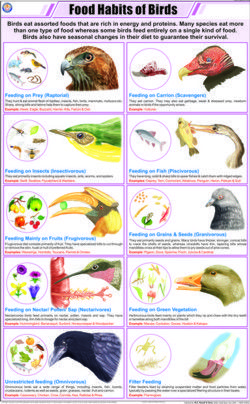Food Habits Of Birds Habits Birds Animals