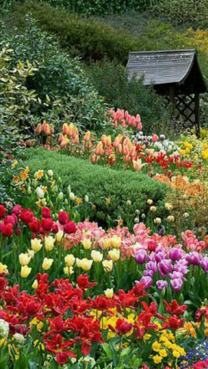 Mixed Tulips With Other Flowers Beautiful Gardens Gorgeous Gardens Dream Garden