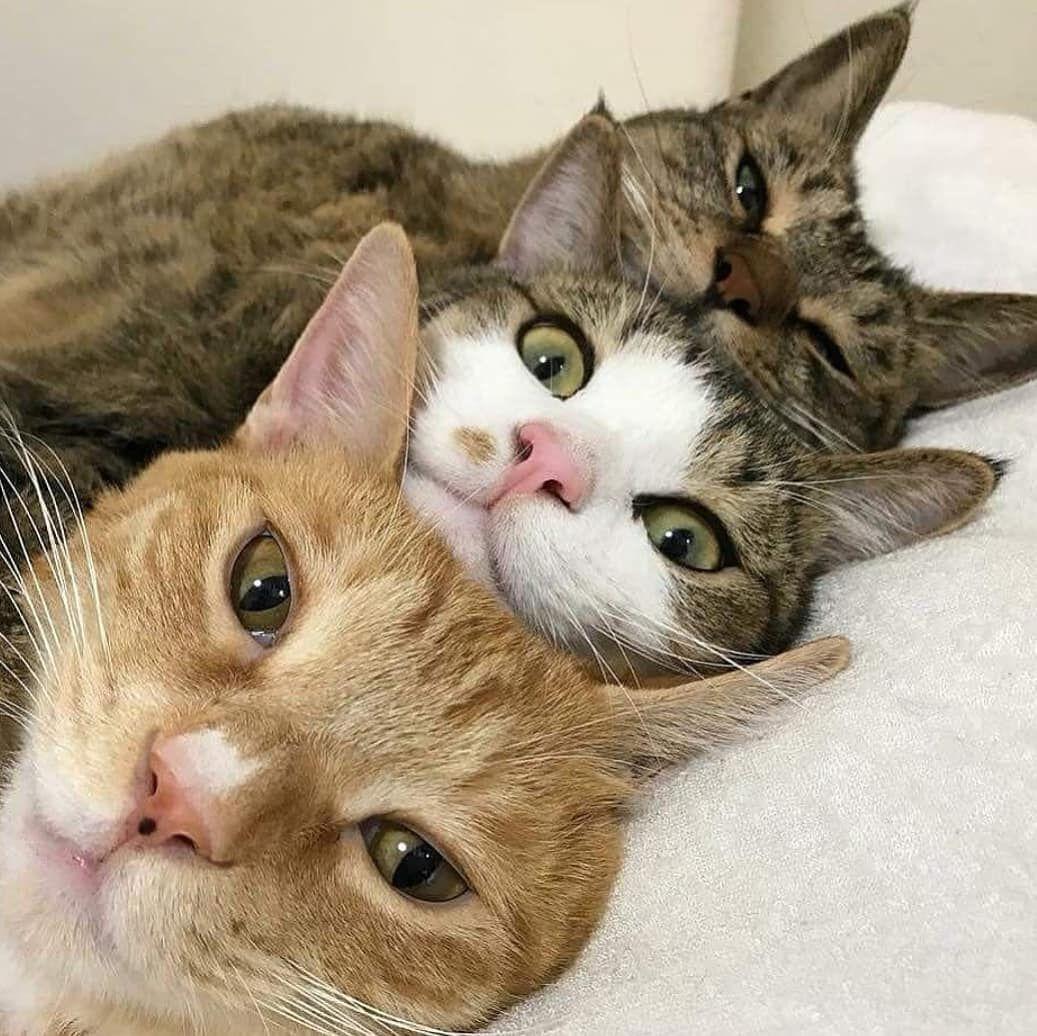 Amazing Cute Cats Cats Cute Animals